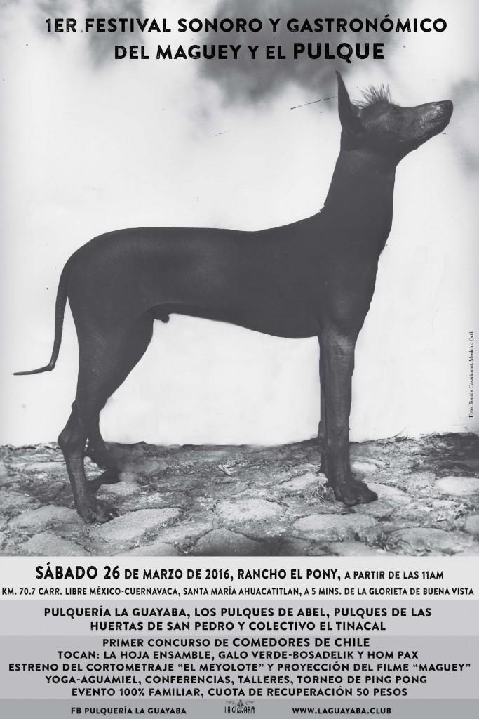 Se proyecta el filme MAGUEY en el PRIMER FESTIVAL DEL PULQUE Y EL MAGUEY EN CUERNAVACA